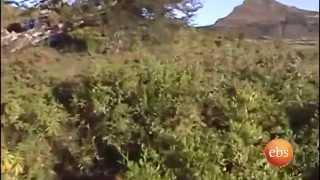 A journey to historica city Gonder   Discover Ethiopia-EBS