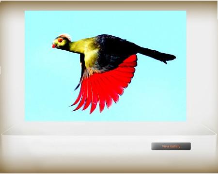 Ethiopian endemic bird_01