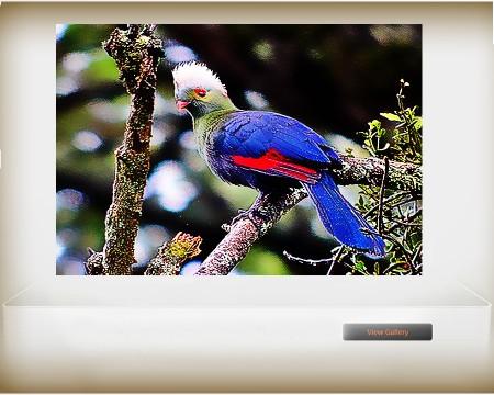 Ethiopian endemic bird_02