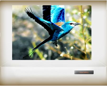 Ethiopian Endemic bird_04
