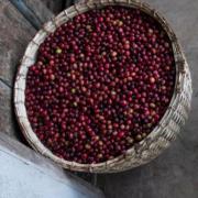 Ethiopia  exports coffee beans
