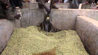 Ethiopian Coffee Processing_2017 | Documentary_HD